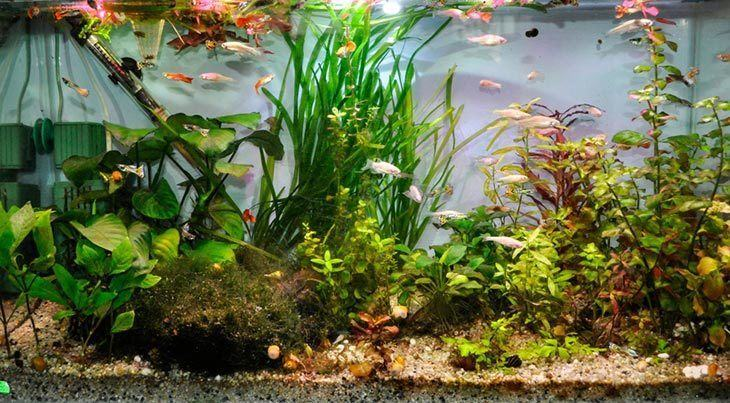 A-submersible-aquarium-heater-is-stuck-on-the-tank-base-to-warn-up-the-water-for-the-fish