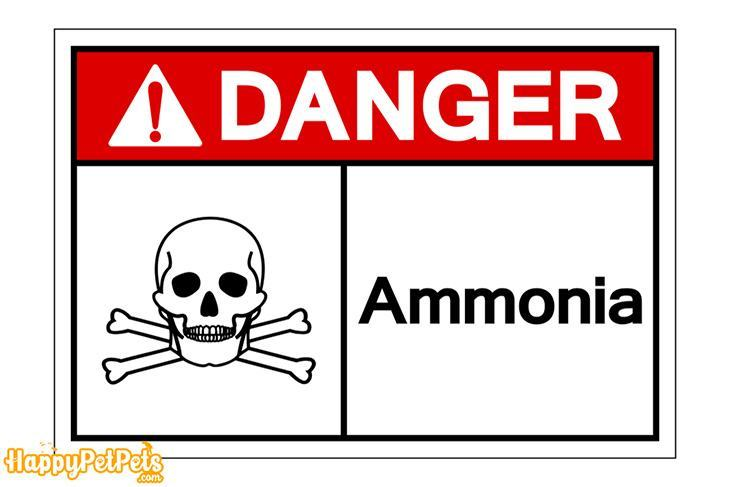 Ammonia-at-a-high-level-can-cause-death-to-the-fish
