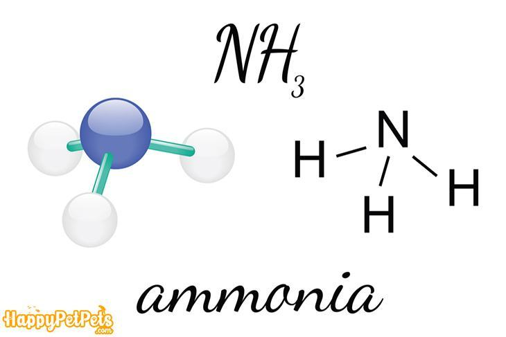 Form-of-ammonia-(NH3)