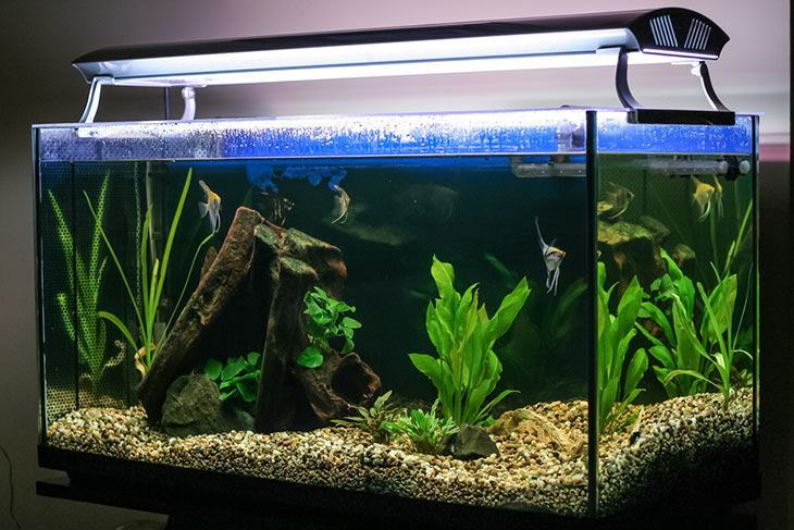 You-can-use-aquarium-lights-to-keep-the-fish-tank-warm-without-a-heater
