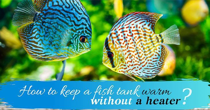 how-to-keep-a-fish-tank-warm-without-a-heater