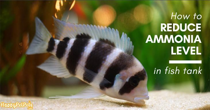 how-to-reduce-ammonia-level-in-fish-tank