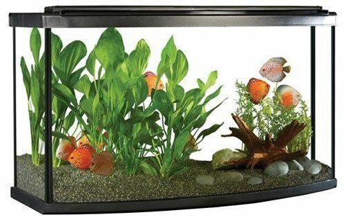 Fluval Premium Bow Front Aquarium Kit, 45 Gallon