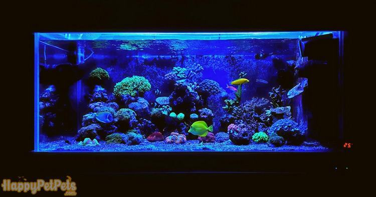Colorful coral reef with midnight blue LED lights