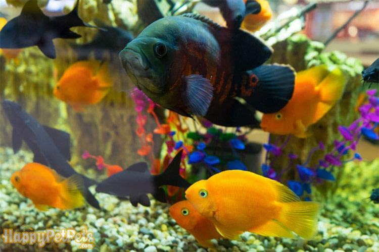 Colorful-fish-swimming-in-a-saltwater-aquarium