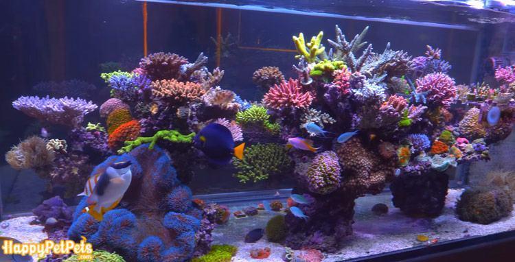 DIY saltwater aquarium setup