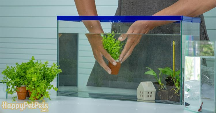 Fill-in-water,-set-the-decoration-and-then-put-the-fish-back-in-the-tank-if-you-clean-the-gravel-witho
