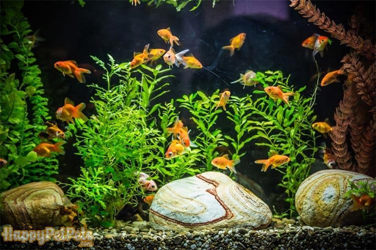 Freshwater-vs.-saltwater-tank-setup-steps-are-not-hugely-different