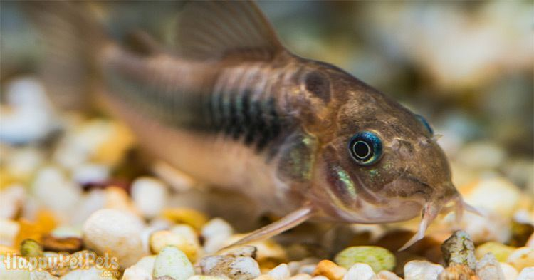 Gravel is a place for fish to play, reduce stress as well as raise the beneficial bacteria for your fish development