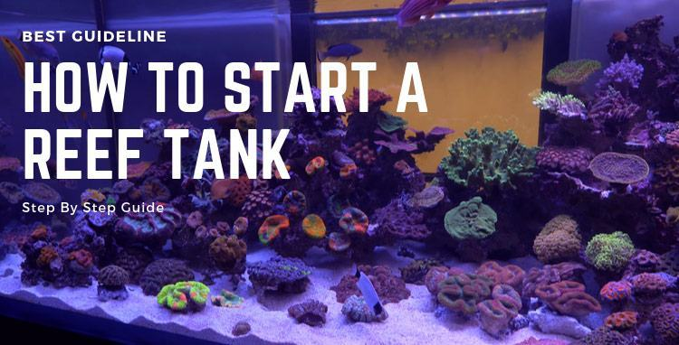 how to start a reef tank step by step