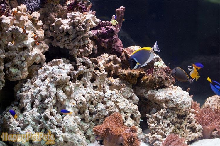 Live-rock-is-an-optional-choice-for-upgrading-the-saltwater-tank