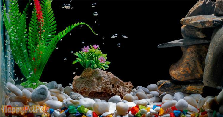 The-aquarium-gravel-layer-height-is-based-on-your-fish-and-decoration-mostly