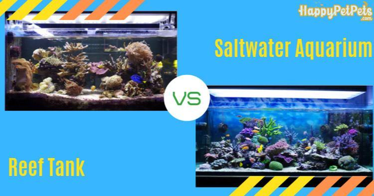 What is the difference between a reef tank vs. a saltwater aquarium