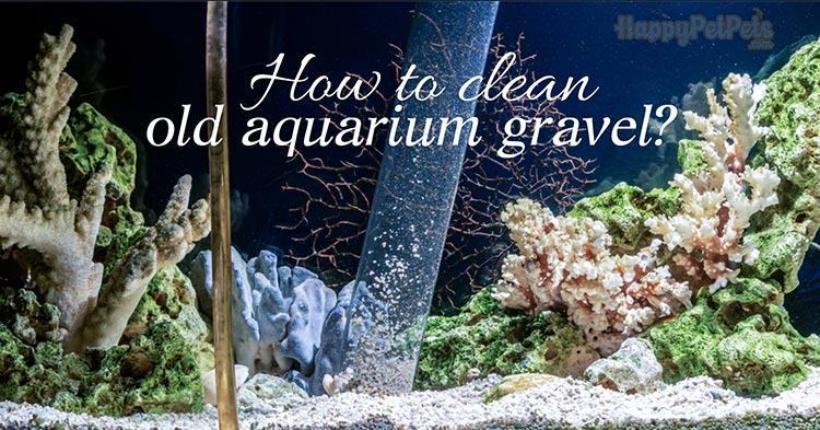 how-to-clean-old-aquarium-gravel