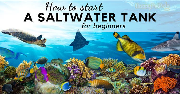 How to start a saltwater tank