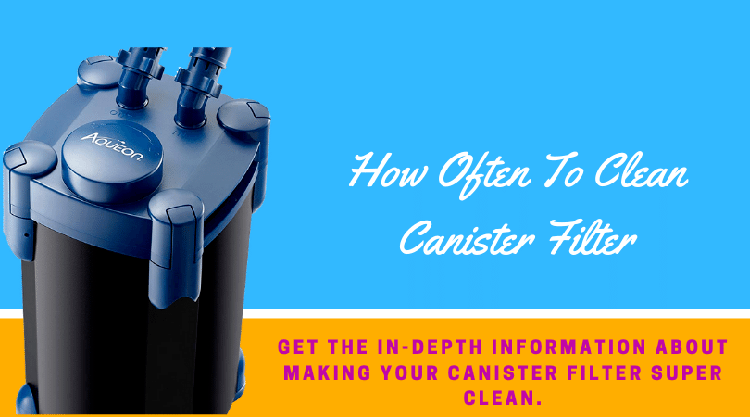 How Often To Clean Canister Filter