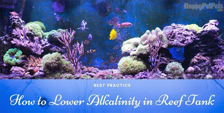 How-to-lower-alkalinity-in-reef-tank