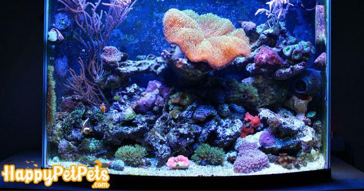 What is a nano reef tank