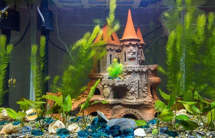 A-medieval-decorated-small-aquarium-hang-on-back-filter
