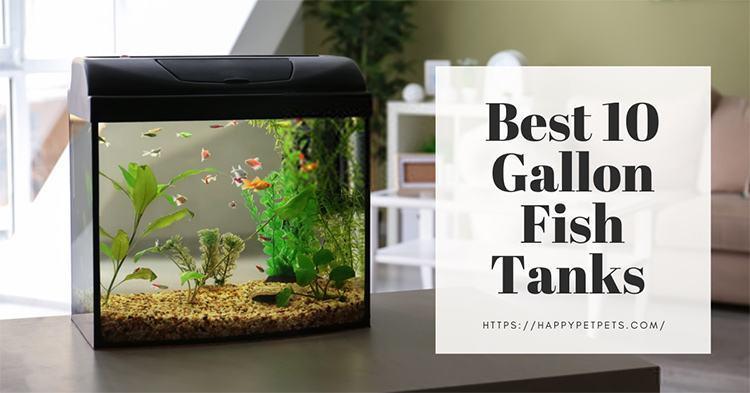 Best 10 Gallon Fish Tanks to Serve Your Aquarium