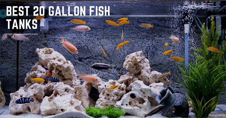 Best 20 Gallon Fish Tank Tips And Review Happy Pet Pets