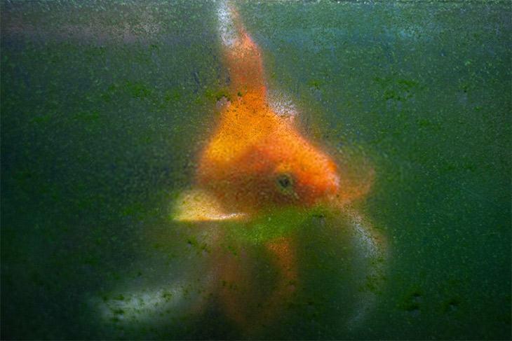 Dirty glass aquarium