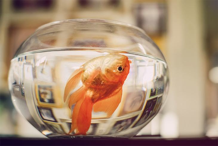 Fish die in clear glass