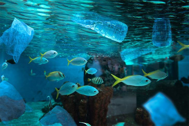 Some-bags-floating-in-fish-tank