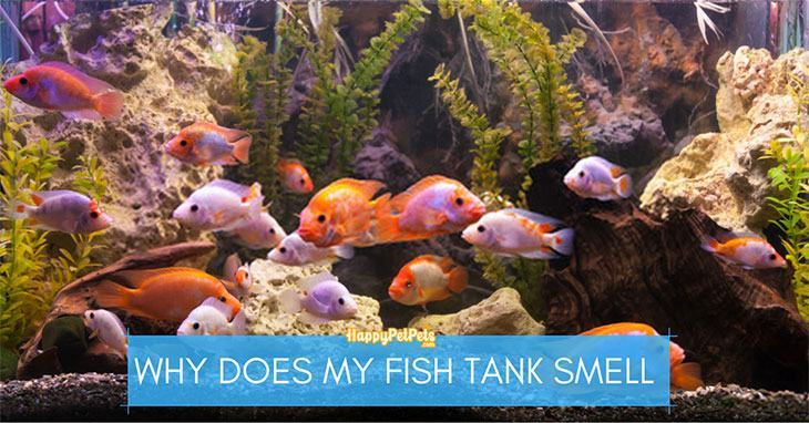 why does my fish tank smell