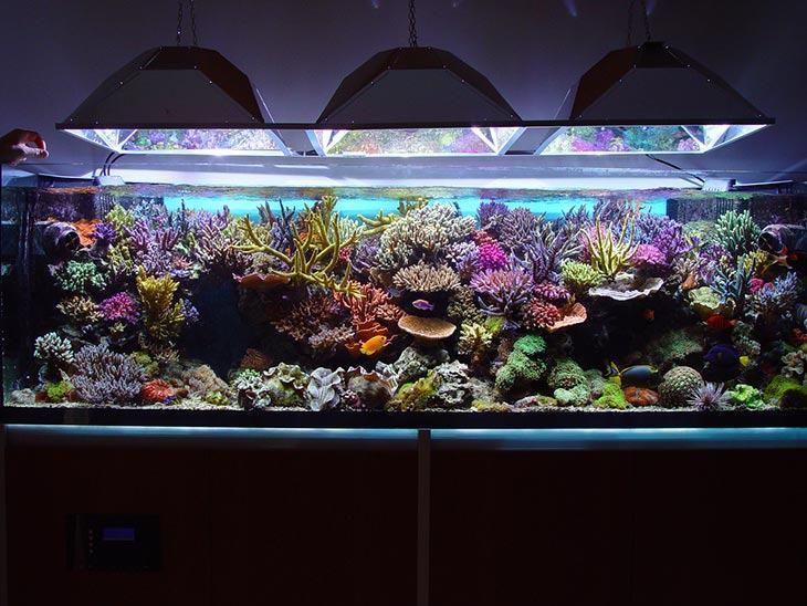 Large coral aquarium with marine fish Fluval FX6 review