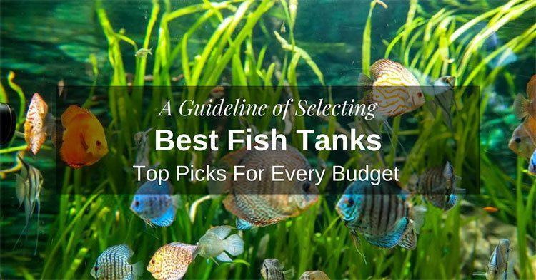 Best-Fish-Tanks
