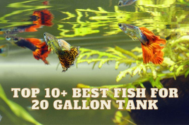 best-fish-for-20-gallon-tank