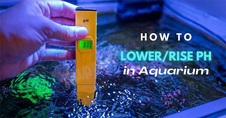how-to-lower-raise-ph-in-aquarium