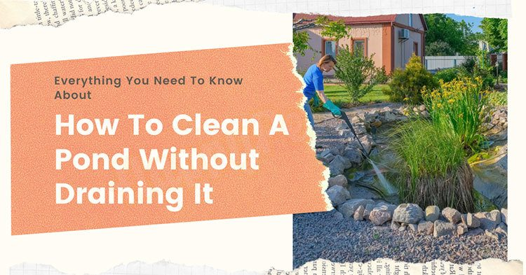 How-to-clean-a-pond-without-draining-it