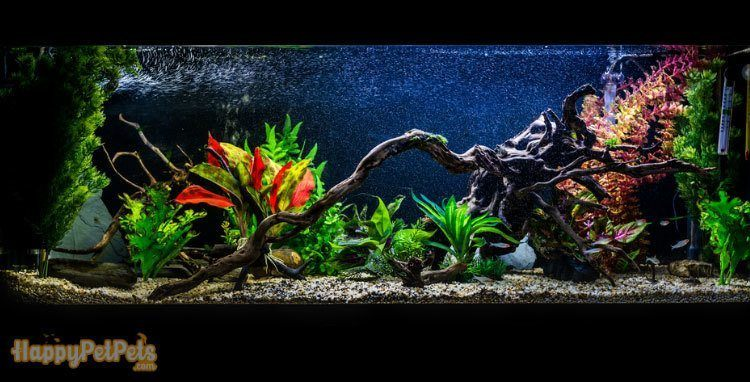 A-55-gallon-tank-is-ideal-for-your-fish-