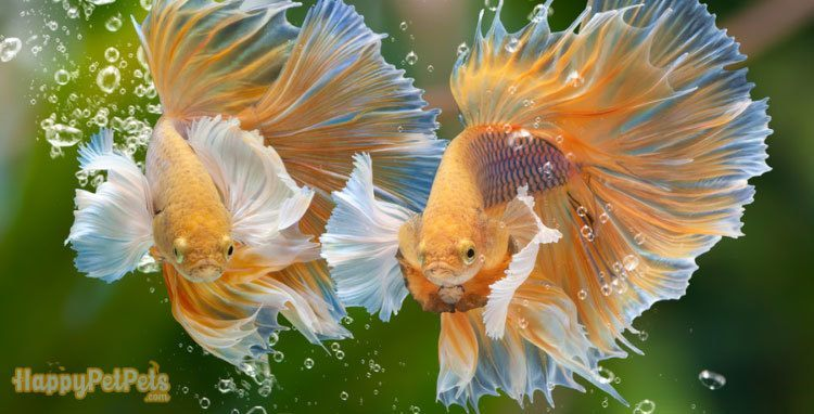 A-fish-filter-will-stir-the-tank-water-around-constantly