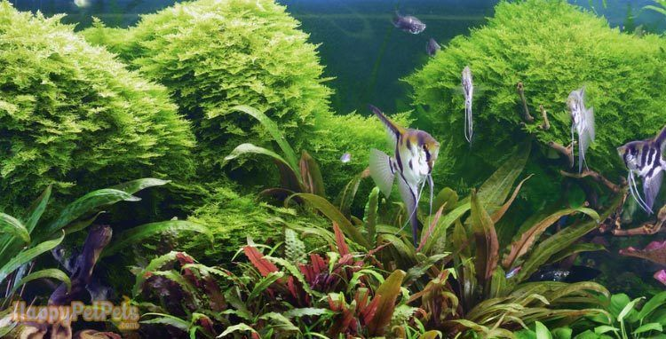 An-adequate-water-environment-is-critical-to-your-moss's-health