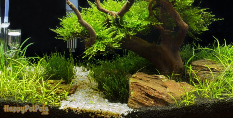 Any-water-feature-can-affect-your-Christmas-moss's-health