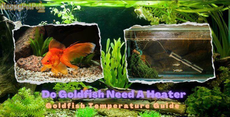 Do-Goldfish-Need-A-Heater