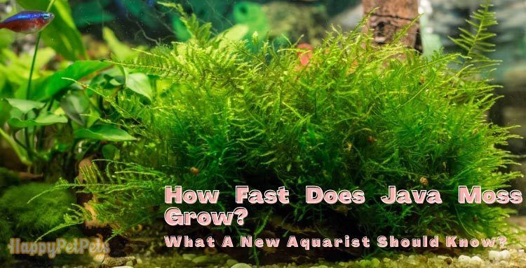 How-fast-does-Java-moss-grow