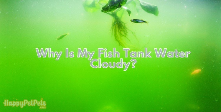 Why-is-my-fish-tank-water-cloudy