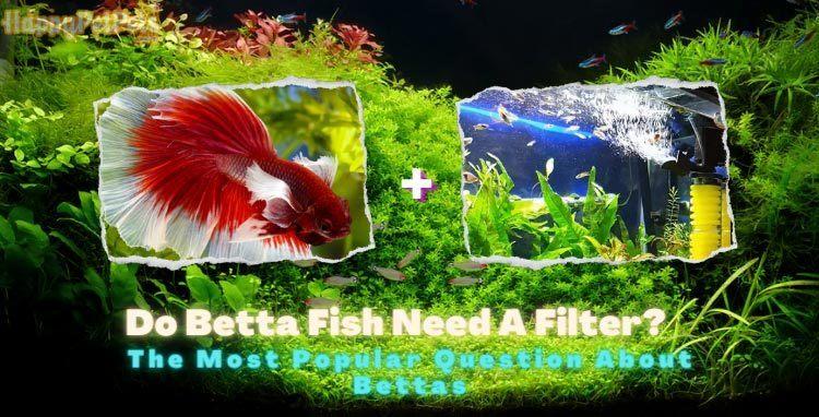 do-betta-fish-need-a-filter